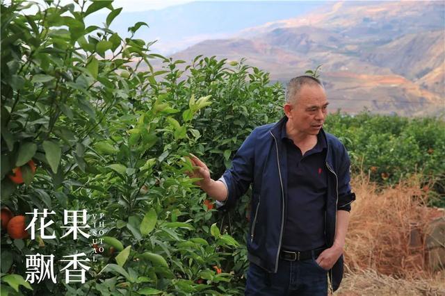 """在云南省种""""沃柑""""的浙江省老总 林小波变换"""