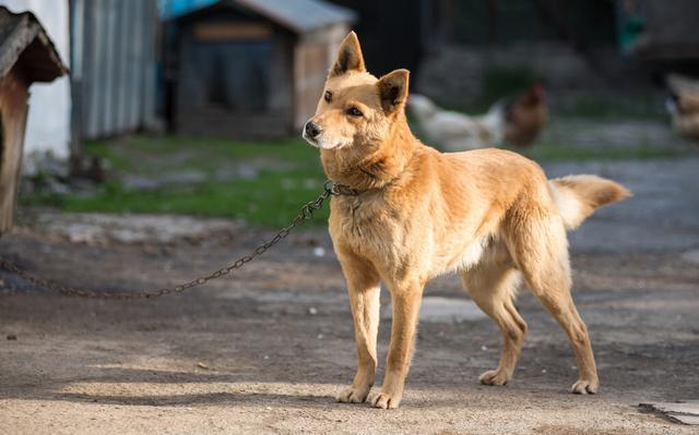 流浪狗的誕生,並非愛狗人士遺棄,它只是一個時代的犧牲品罷了 家有萌寵 第2张