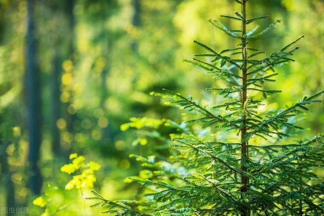 节日由来,关于植树节的知识,植树节的来历,家长们都知道吗