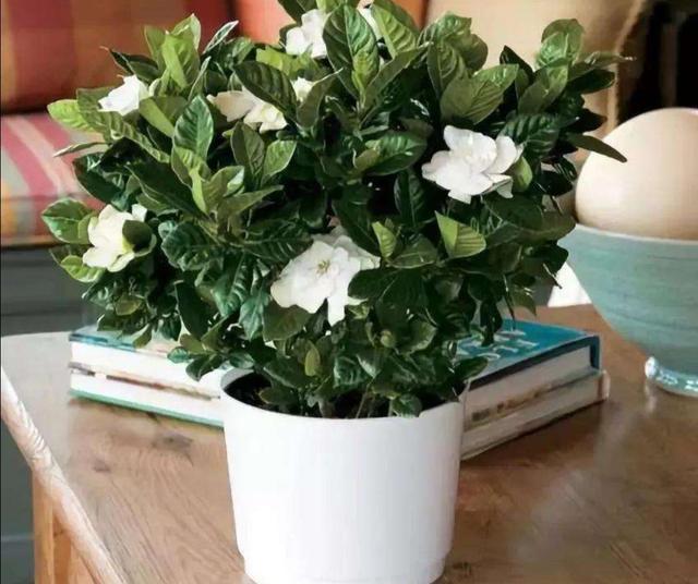 家庭养花,常浇4种水,叶子浓绿、光亮,开花更鲜艳
