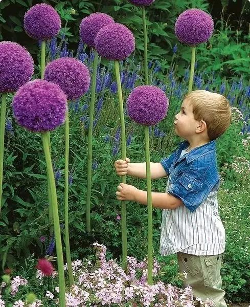 大树图片,100种奇花异卉,今天算开眼了