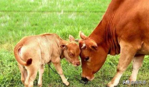 反刍动物有哪些,如何给反刍动物(牛/羊)等选择优质的粗饲料?