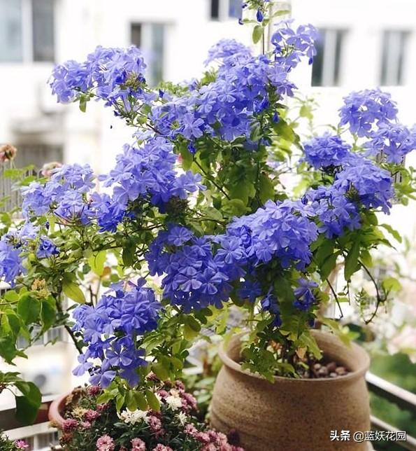 养花新手就养这10种花,就是工作繁忙的人也能轻松养好