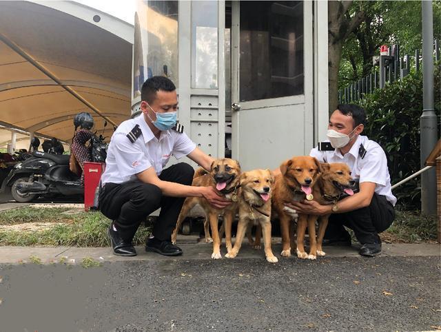 4隻流浪狗入職阿里,如今一年過去了,它們怎麼樣了? 家有萌寵 第2张