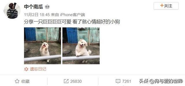 小狗图片,网友分享了两张土狗宝宝的照片,治愈了万千网友