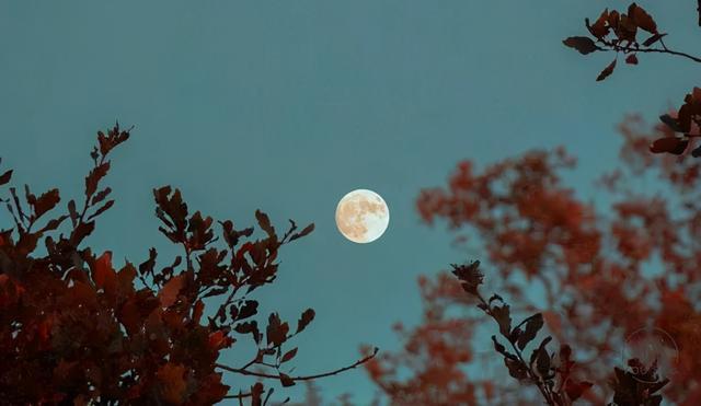 去年元夜时花市灯如昼是什么节日,元宵节:盼平安喜乐,愿人间团圆