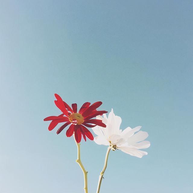 清晨的阳光唯美句子,早安发圈的精美短句,元气满满,愿你心向阳光