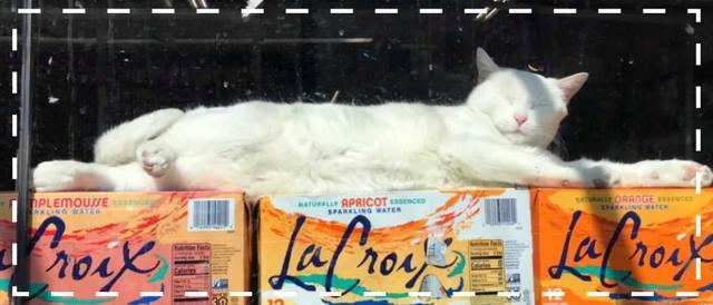 猫咪图片,50张便利店的猫咪图片:超级治愈,赶走一天的坏心情
