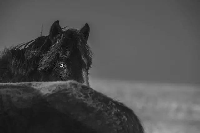 名人的马,战功赫赫的马,驰骋草原的马,都是蒙古人的浪漫