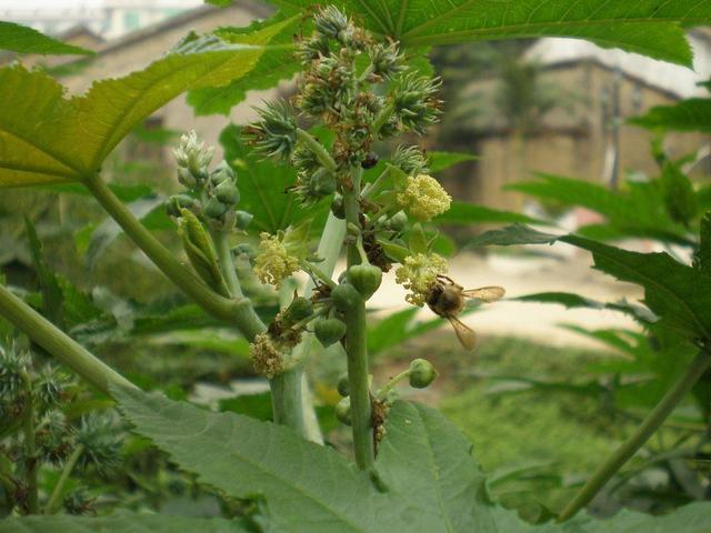 世界上最毒的花园,花园里的95种有毒植物,随时可要你的命