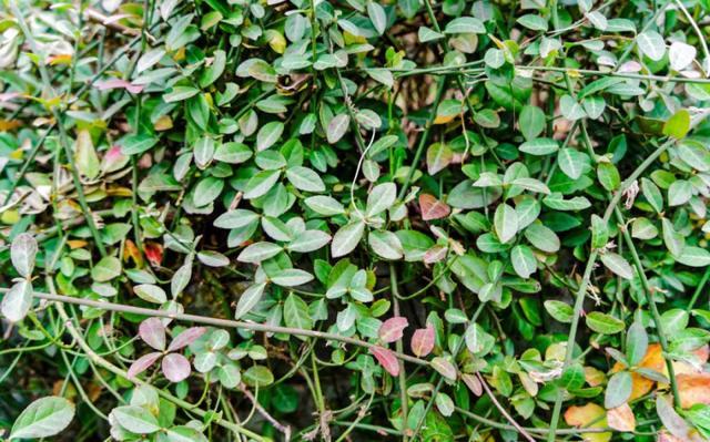 盘点园林景观设计常用的各类植物和材料,让设计师不再迷茫