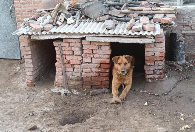 流浪狗的誕生,並非愛狗人士遺棄,它只是一個時代的犧牲品罷了 家有萌寵 第3张