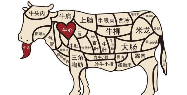 美食的资料,收藏吧!美食资料!教你认识牛肉各部位,教你怎样烹饪才好吃