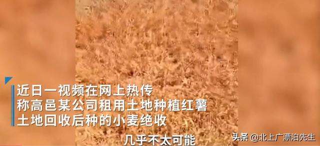 农民网曝河北一公司用40种农药种红薯导致土地绝收,事实如此吗? 全球新闻风头榜 第1张