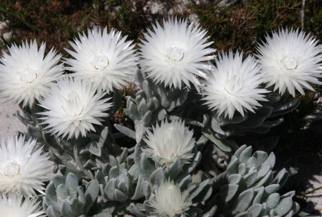 """0种罕见又美丽的植物,果实似羽毛,地下开花,见过的人真幸运"""""""