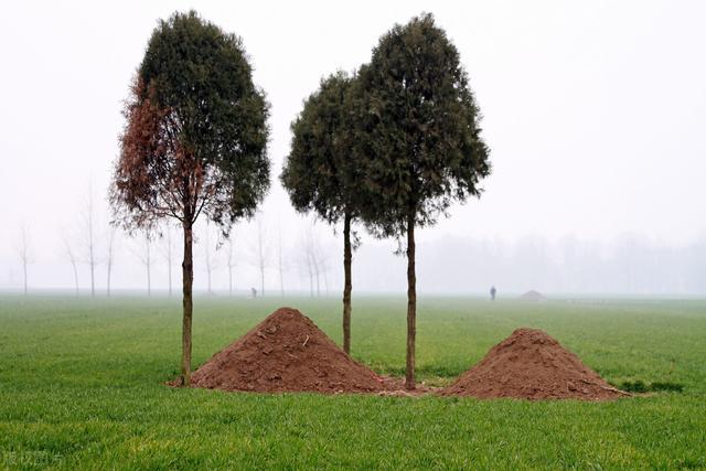 """树树的寓意,农村俗语""""坟前种三树,子孙得佑护""""什么意思?清明可以种树吗?"""