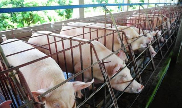 2020年一季度好几家养殖公司纯利润急剧下降