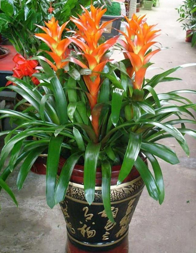 """种寓意""""旺财""""的花,适合养在家里,看着就有好兆头"""""""