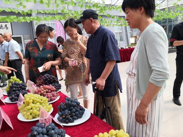 早熟葡萄品种,葡萄品种多如牛毛?早熟高产葡萄品种图鉴,绝对涨知识