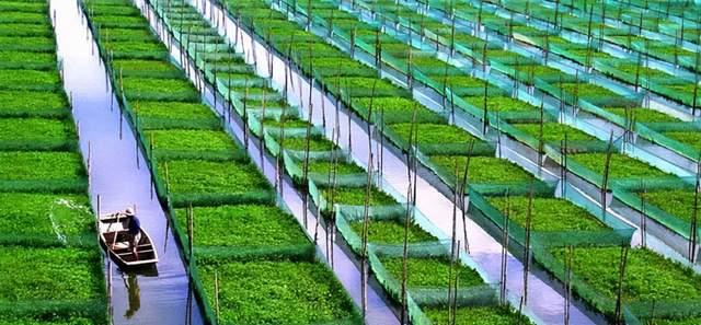 农村电商的未来:分享农业-识物网 - 中国商业零售品牌知识门户