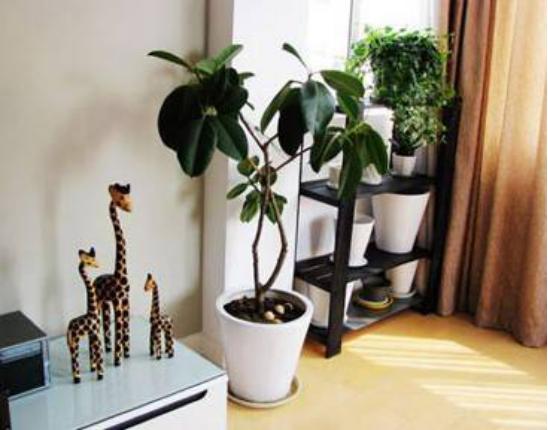 客厅绿植3