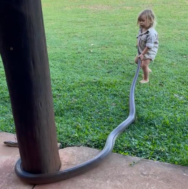 澳洲狂野早教:2岁娃单挑巨蟒,爸爸在一旁指点加油,这?