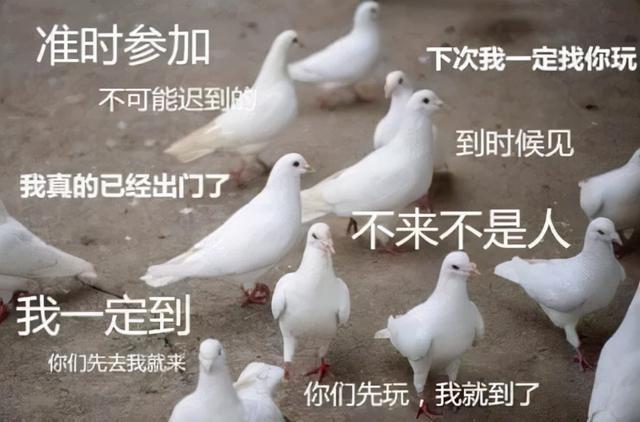 不鸽了:澳洲宣布认可中国科兴疫苗,国际旅行禁令取消