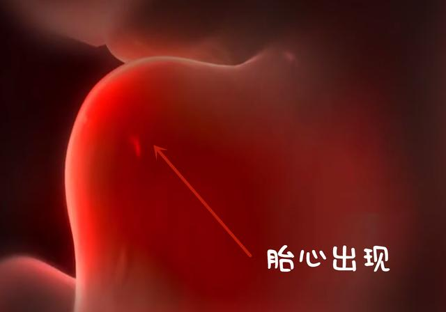 3D组图:带你看胚胎发育全过程,胎心出来的那一瞬,妈妈笑着流泪