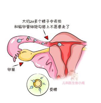 """掌握排卵期,有备而""""孕"""",你就是下一个幸""""孕""""儿"""
