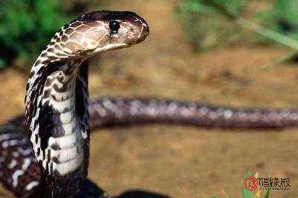 男属蛇与十二生肖婚配(属蛇和十二生肖婚配表)-第1张图片-天下生肖网