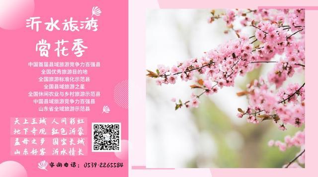 """媒体报道丨80万网友""""云""""赏沂水桃花,直播诗与远方引来8倍客流"""