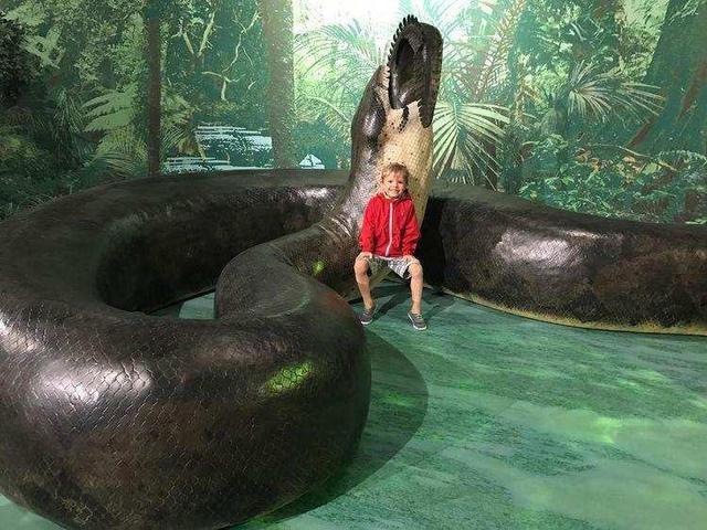 惊险!印尼村民诱捕9米长巨蟒,世界上最大的蛇是什么?有多长?