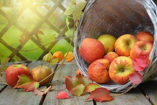 苹果减肥 有奇效 一个月狂瘦15斤