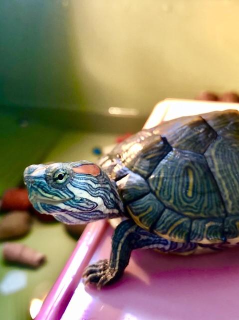 十大最好养的乌龟是哪些,买一只乌龟多少钱