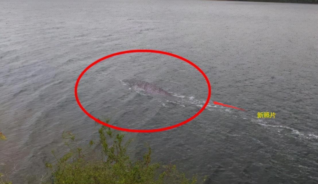 英国男子用无人机拍到尼斯湖水怪,引发热议,这到底是什么?