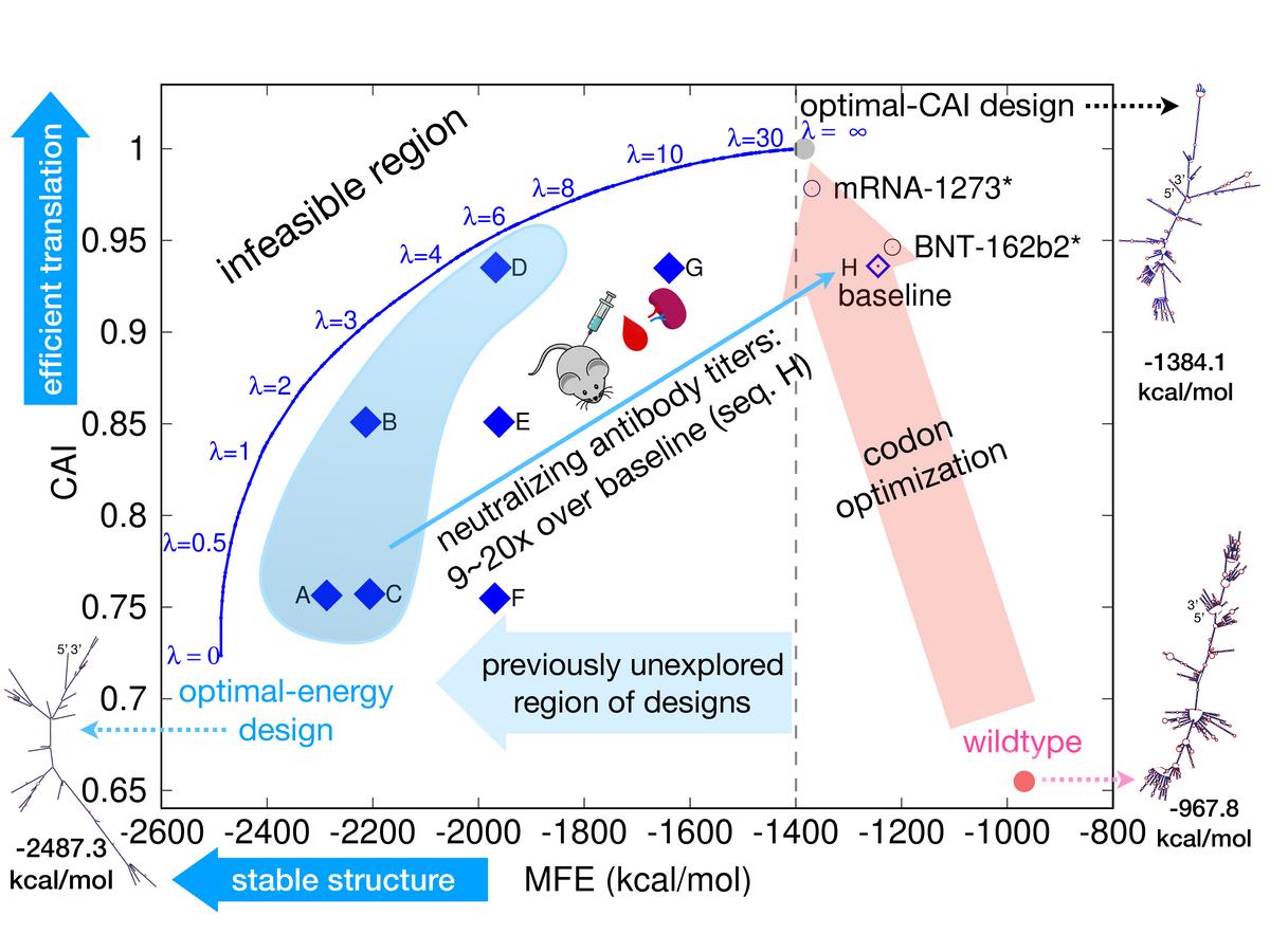 百度LinearDesign算法生物实验指标均优于标准算法