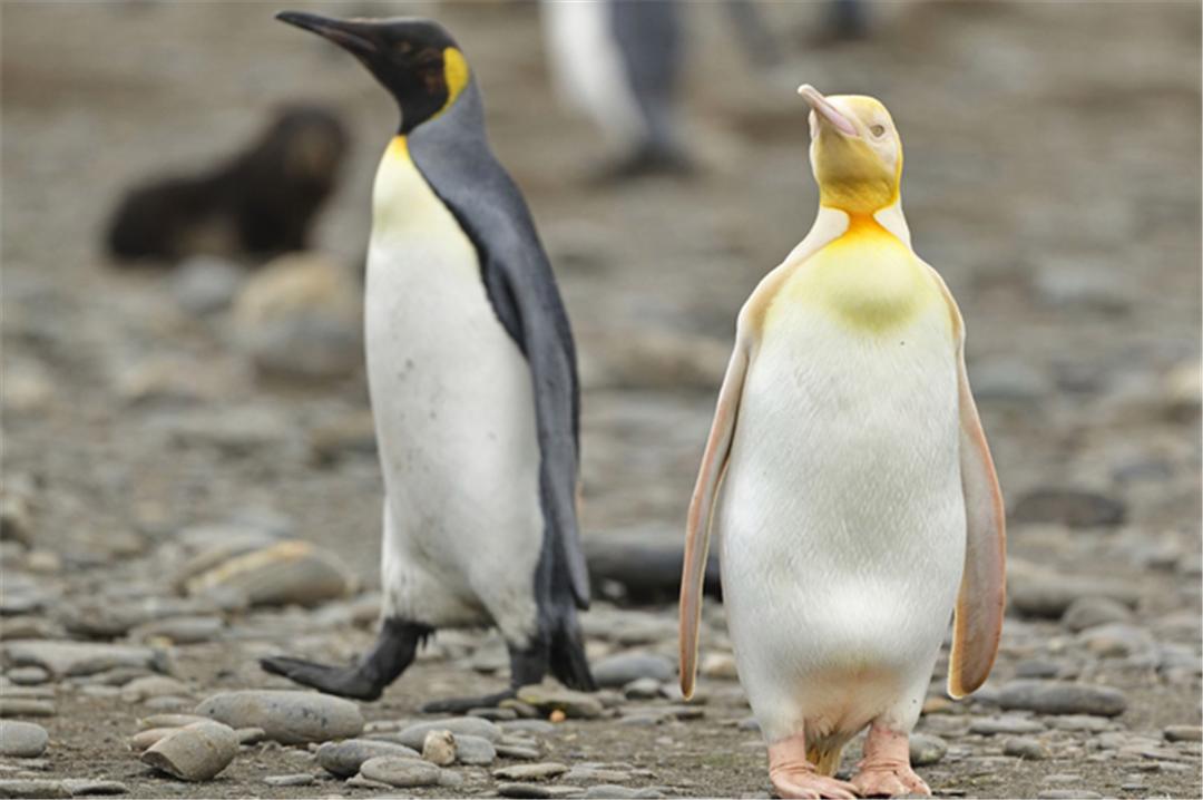 这些罕见稀有的动物,美到让人忘记呼吸,你见过吗?