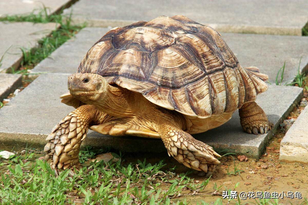 养乌龟放多少水?原来其中大有学问,居然还有不需要水养的乌龟