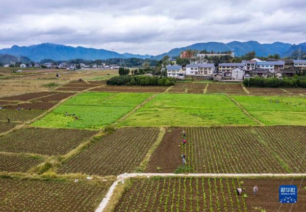 贵州绥阳:秋冬蔬菜种植忙